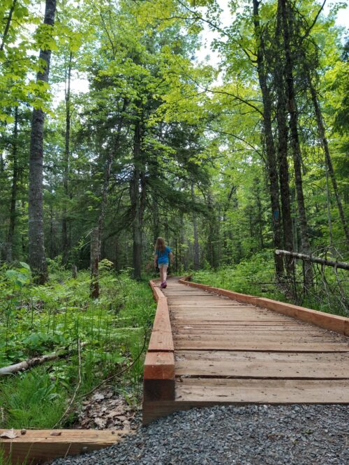 A child heads into the woods on a wooden boardwalk.