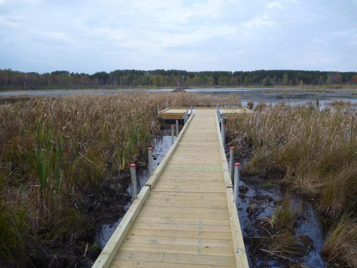 A wooden boardwalk extends into a grassy wetland.